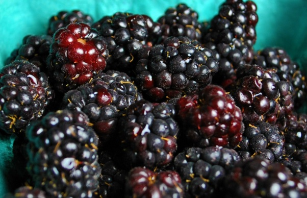 15 Health Benefits of Olallieberry (No.14 Super)