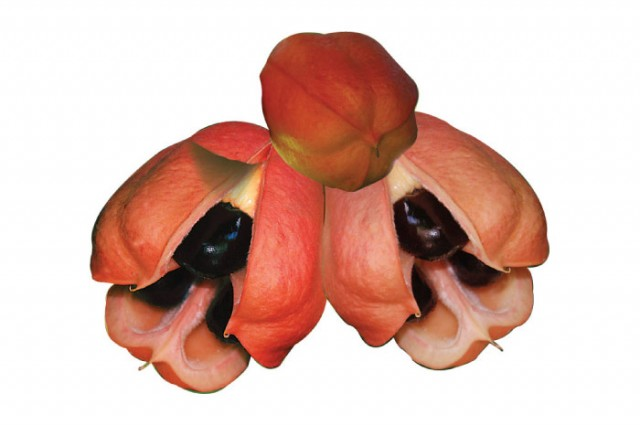 15 Top Health Benefits of Ackee Fruit (No One Knows)