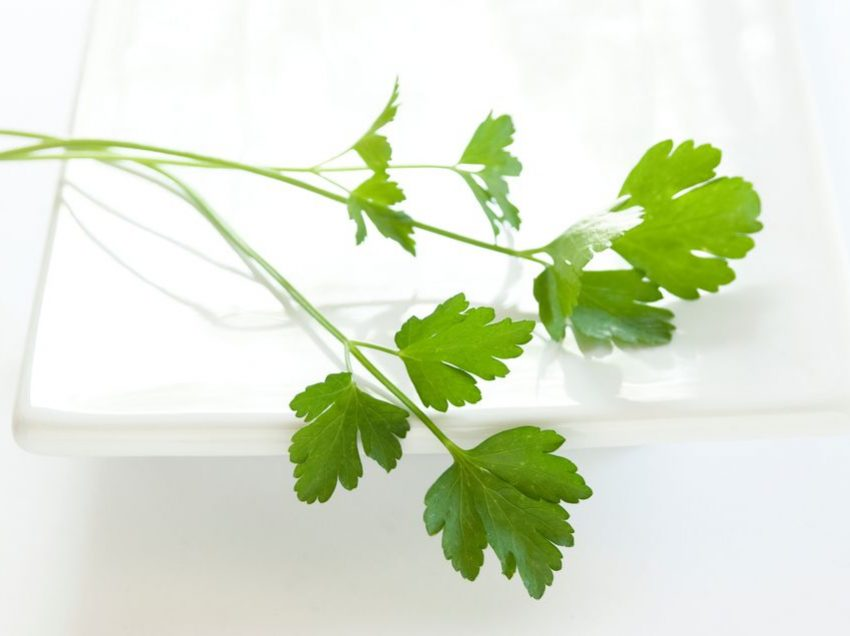 18 Scientific Health Benefits of Italian Parsley (No.16 is Miraculous!)