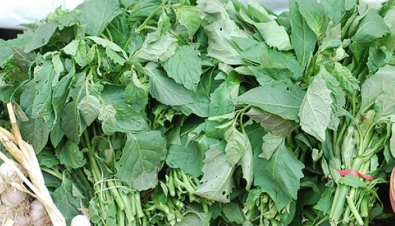 Image result for picture of bitter leaves