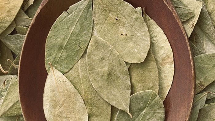 12 Scientific Health Benefits of Coca Leaf – Anaesthetic – Bones
