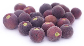 25 Scientific Health Benefits of Falsa Fruit (No 24 is Great)