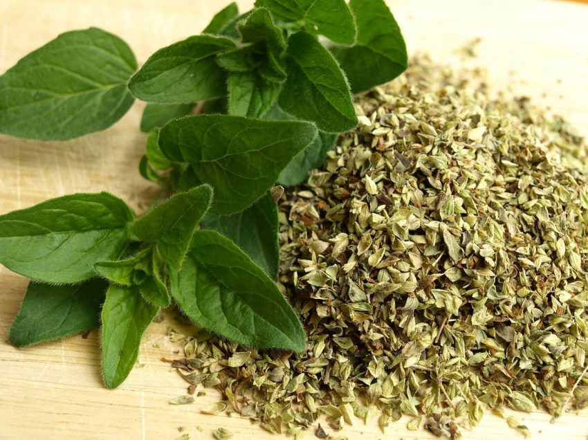 35 Scientifically Health Benefits of Oregano Leaves – Beauty – Medical Treatments