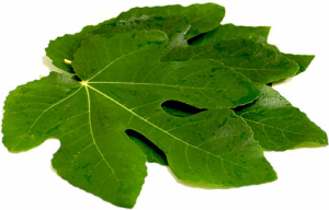 figs leaves benefits
