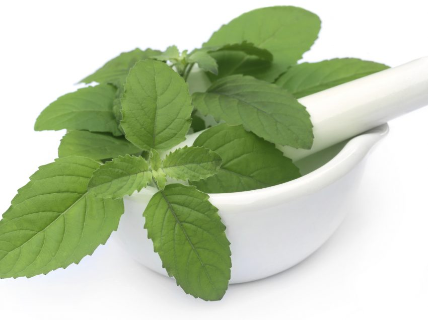 17 Health Benefits of Basil (Top #1 Healing Herb)