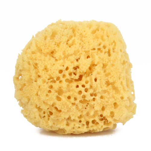 13 Top Benefits of Sea Sponge (#1 Natural Cleaning Purposes)