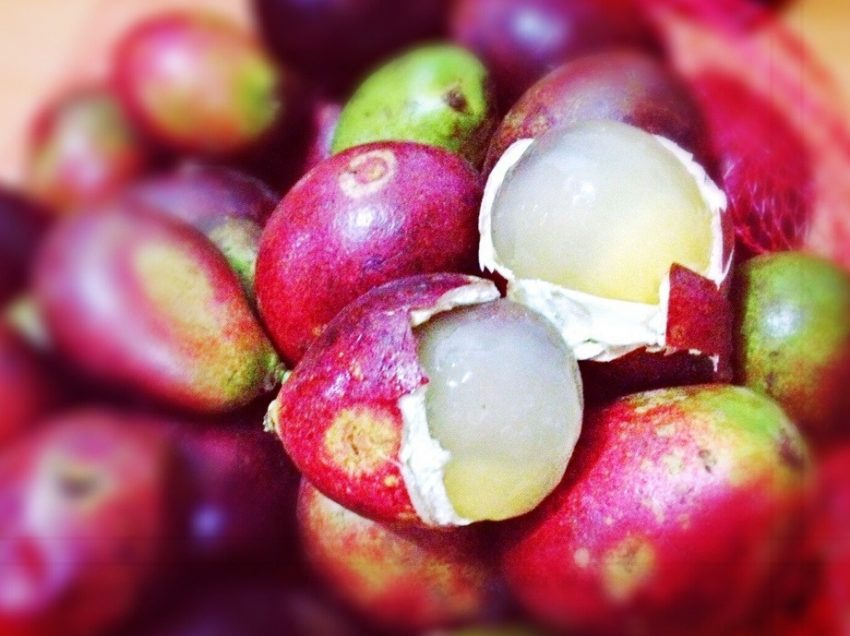 10 Health Benefits of Matoa Fruit (#1 Exotic Fruit from Papua)