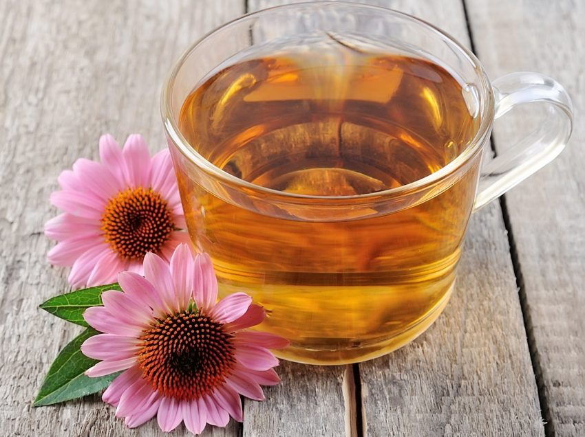 20 Surprising Health Benefits of Echinacea Tea