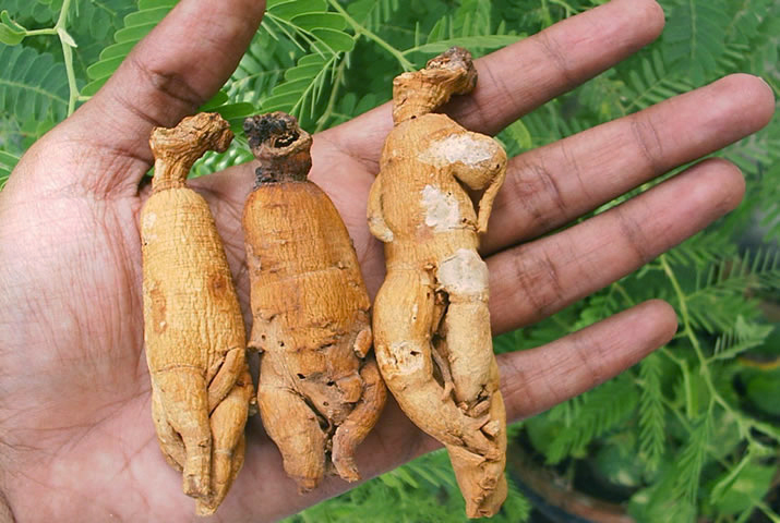 15 Benefits of Ginseng for Males Reproductive Health