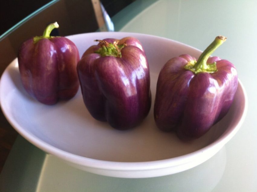 25 Proven Health Benefits of Purple Bell Peppers